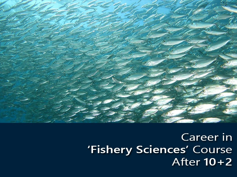 Career in 'Fishery Sciences' Course After 10+2